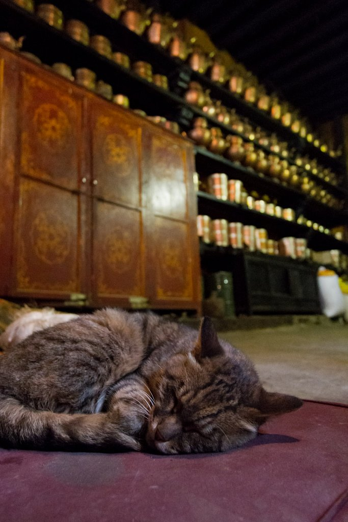 kitchen cat, Drepung Monastery