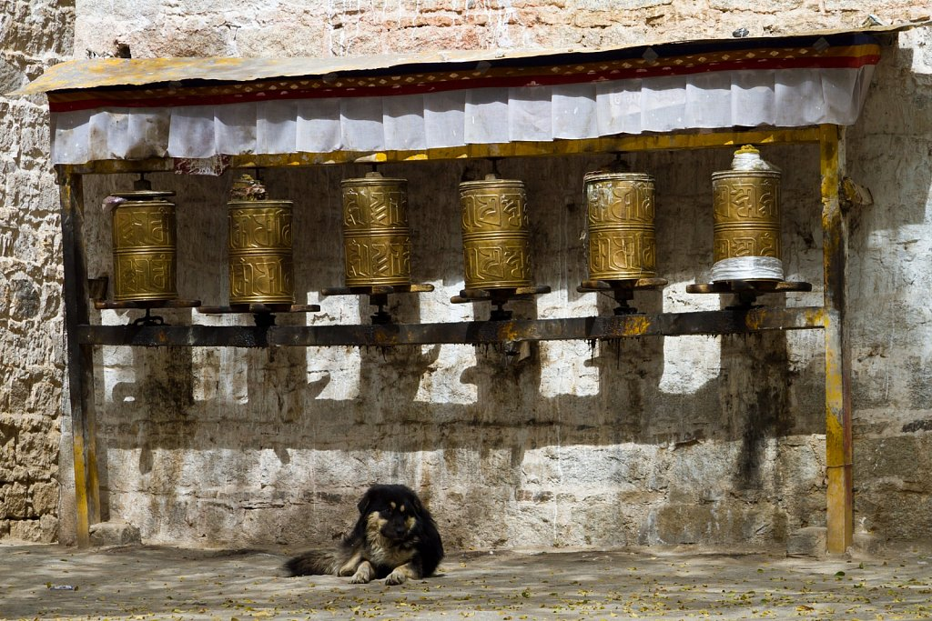 dog and prayer mills, Sera Monastery
