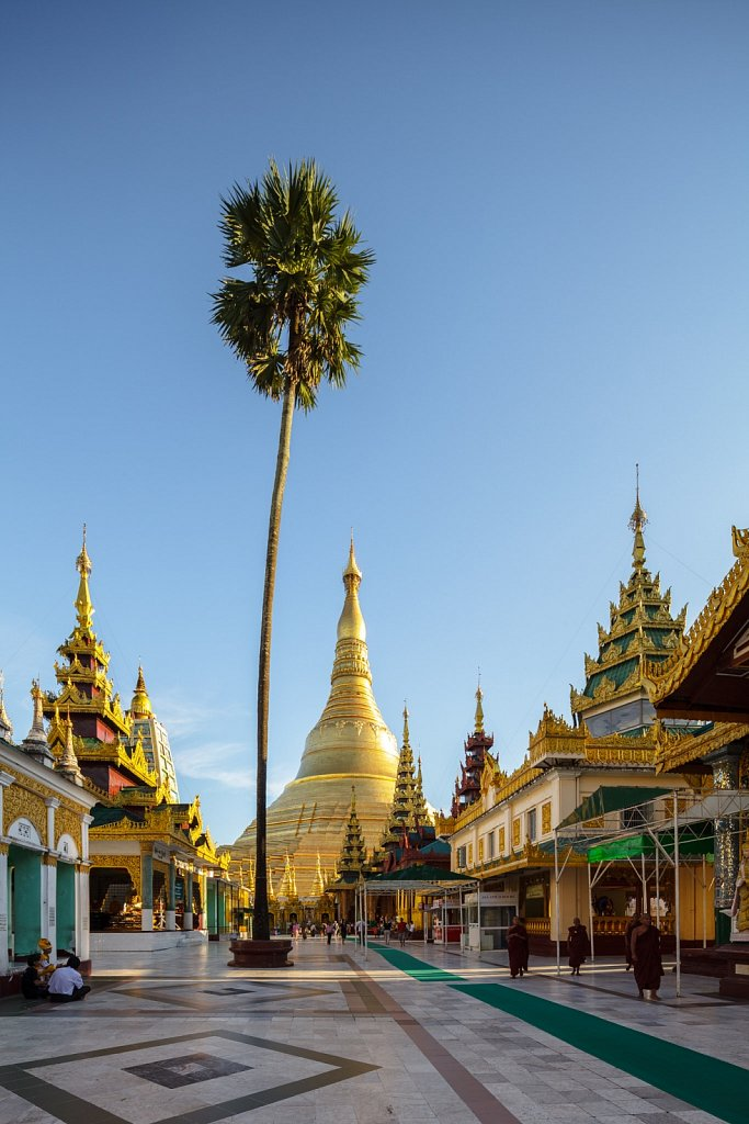 Palm Tree at Shwedagon Pagoda